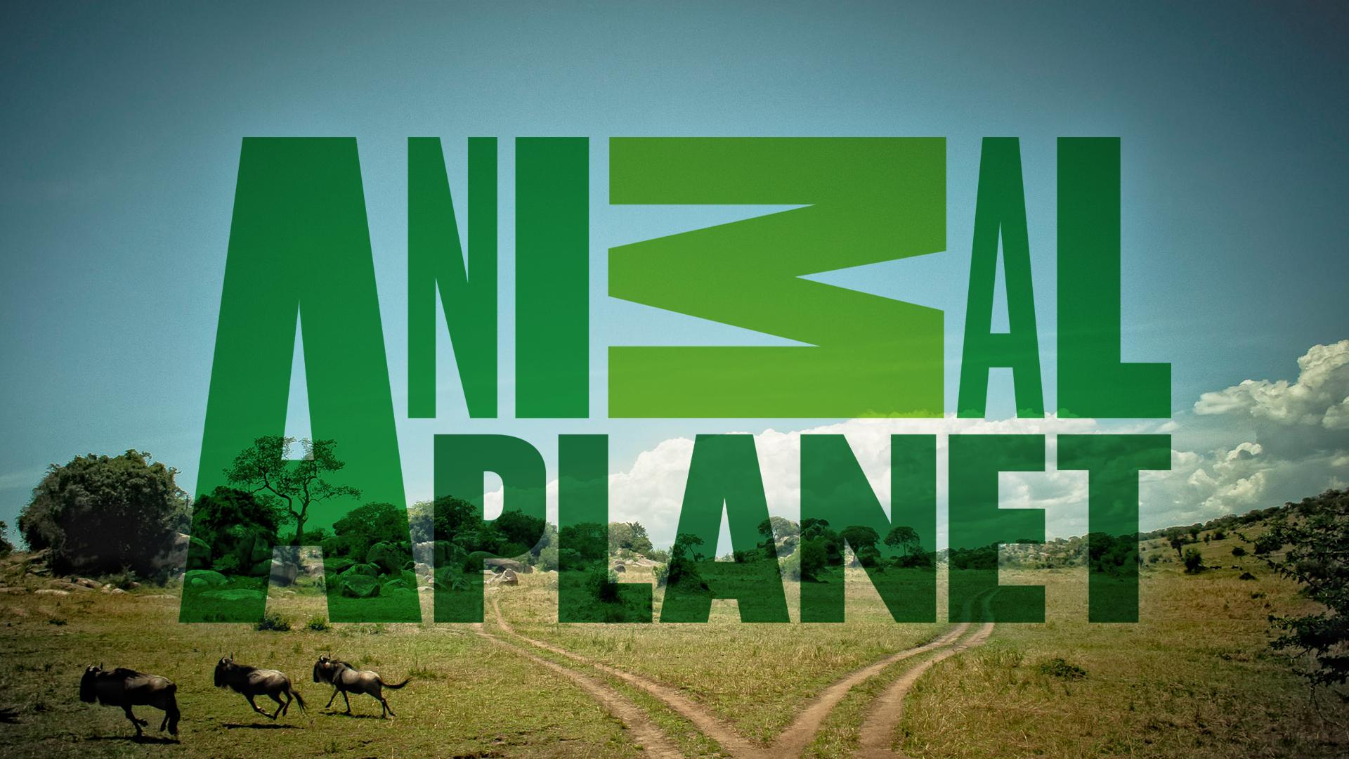 Телеканал анимал планет 22 фотография